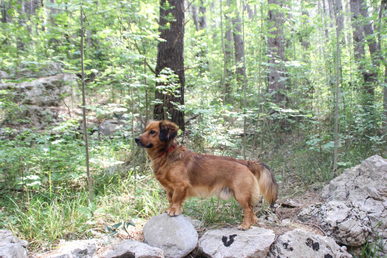 Travel Buddy Dog