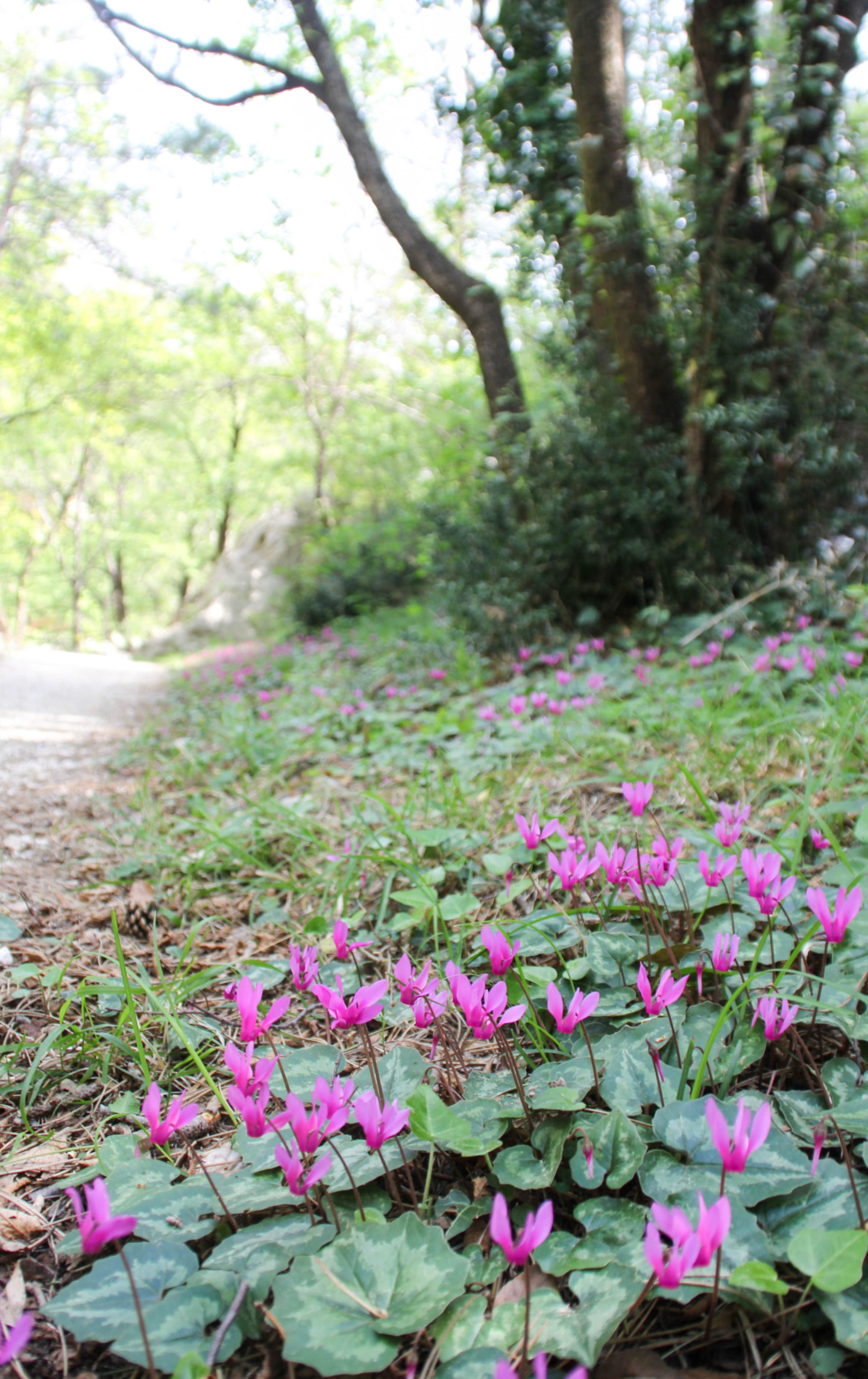 Paklenica Nationalpark Reisezeit